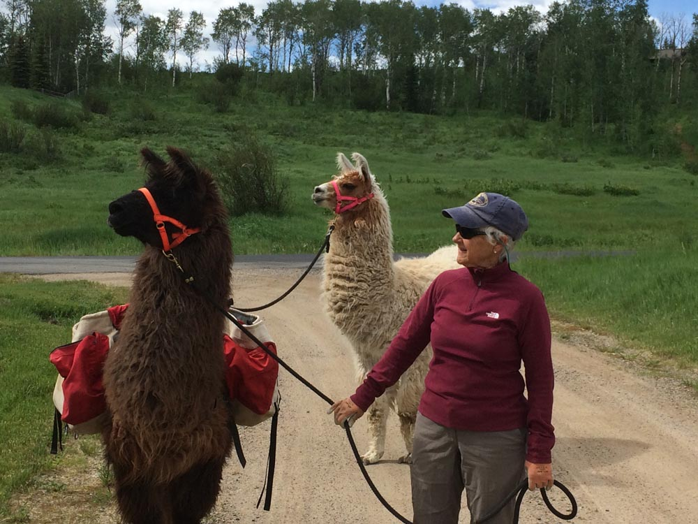 woman walking pack llamas
