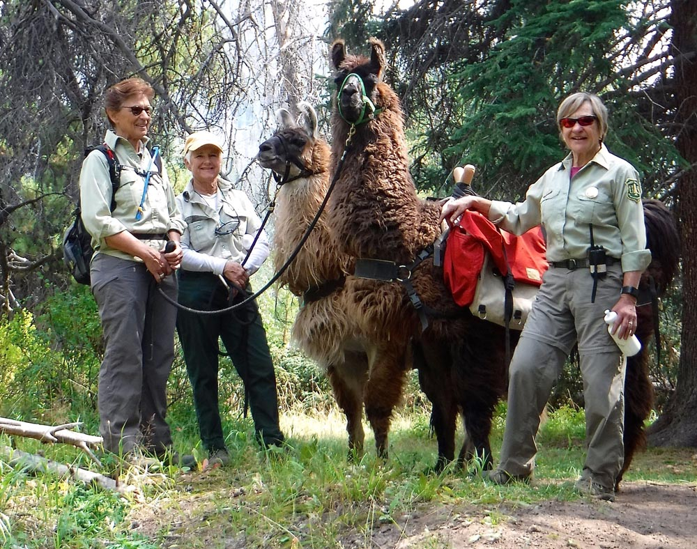 llama ladies on the trail