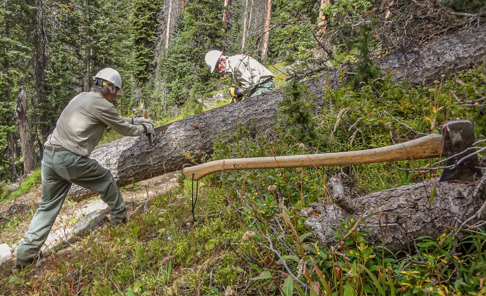 friends of wilderness volunteers sawing a downed tree